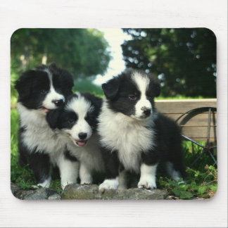 Border Collie Puppy Dog Mousepad