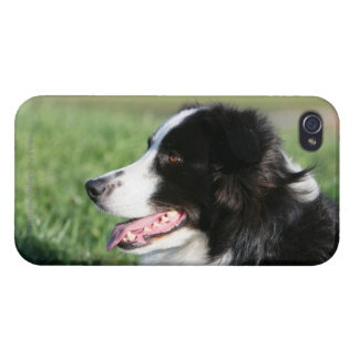 Border Collie Puppy Laying Down iPhone 4/4S Cover