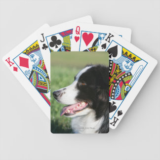 Border Collie Puppy Laying Down Poker Deck