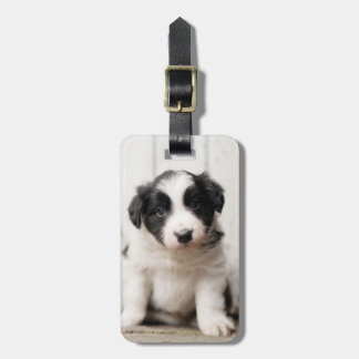 Border Collie Puppy Luggage Tag