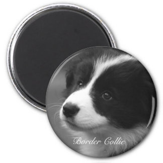 Border Collie puppy Magnet