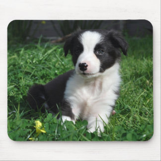 Border collie puppy mouse mat