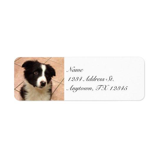 Border Collie Puppy return address labels