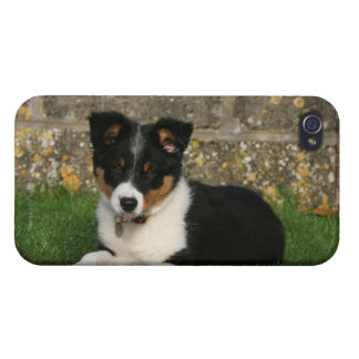 Border Collie Puppy with Leaf in Mouth iPhone 4/4S Covers