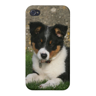 Border Collie Puppy with Leaf in Mouth iPhone 4 Case