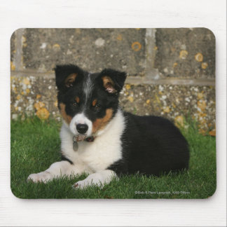 Border Collie Puppy with Leaf in Mouth Mouse Pad