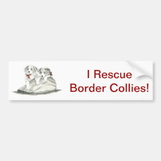 Border Collie Pups Car Bumper Sticker