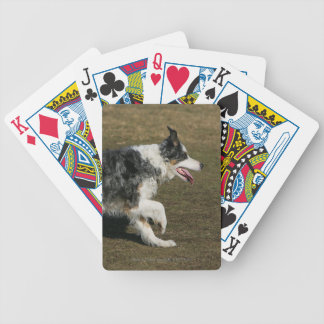 Border Collie Running 1 Bicycle Playing Cards