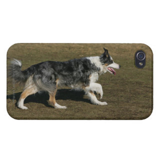 Border Collie Running 1 iPhone 4 Cover