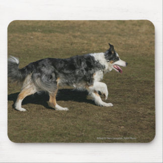 Border Collie Running 1 Mouse Mat