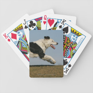 Border Collie Running 2 Bicycle Playing Cards