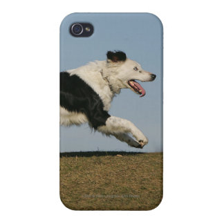 Border Collie Running 2 iPhone 4 Cases