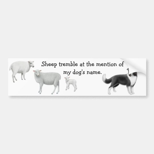 Border Collie & Sheep Herding Bumper Sticker