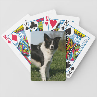 Border Collie Standing Bicycle Playing Cards