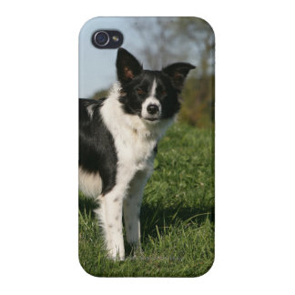 Border Collie Standing iPhone 4/4S Cover