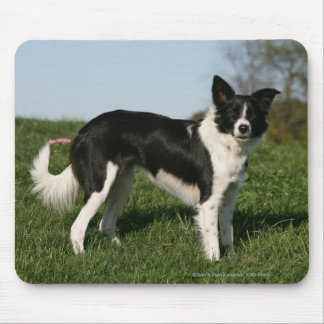 Border Collie Standing Mouse Mat