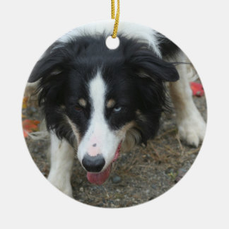 Border Collie Stare Dog Christmas Ornament