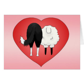 Border Collie Valentine's Day Greeting Card