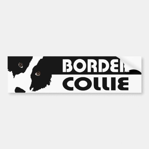 Border Collie Watching Ewe (you) Bumper Stickers