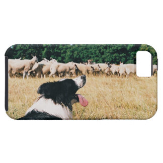 Border Collie Watching Sheep Case For The iPhone 5