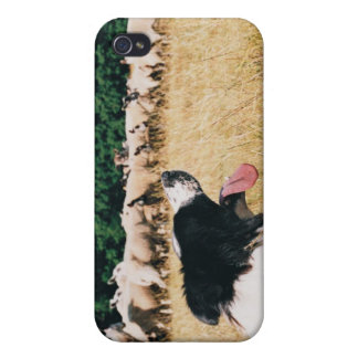 Border Collie Watching Sheep iPhone 4 Case