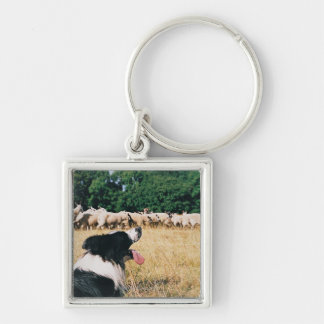 Border Collie Watching Sheep Key Ring