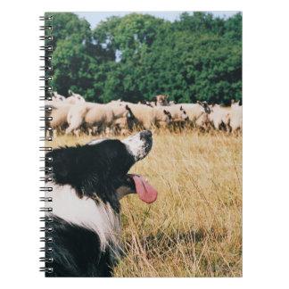 Border Collie Watching Sheep Notebook