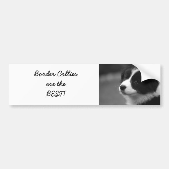 Border Collies are the BEST! Bumper Sticker