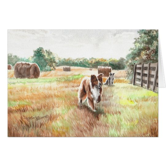 Border Collies - Farm Dogs Card