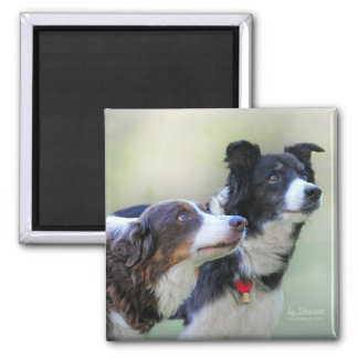 Border Collies Magnet