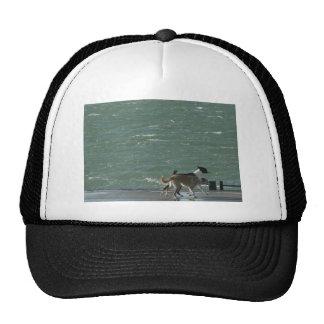 Border Collies - Walking Mesh Hats