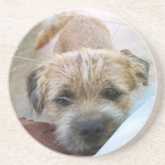 border terrier begging beverage coasters