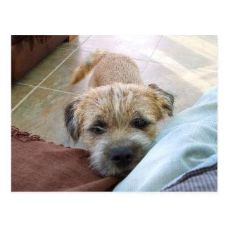 border terrier begging.png postcard