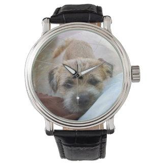 border terrier begging watch