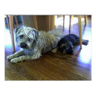 Border_Terrier_brothers2.png Postcard
