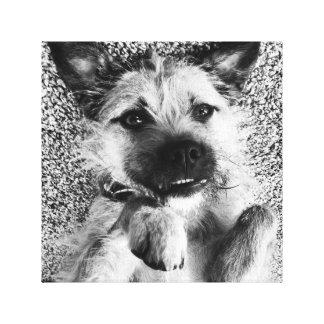 Border Terrier Canvas - I'm So Cute Canvas Print