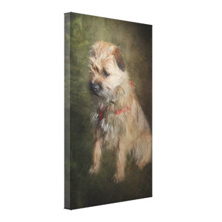 Border Terrier Canvas Print
