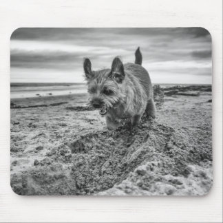 Border Terrier Digging, Photography, Mousepad