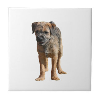 Border Terrier dog beautiful tile or trivet, gift