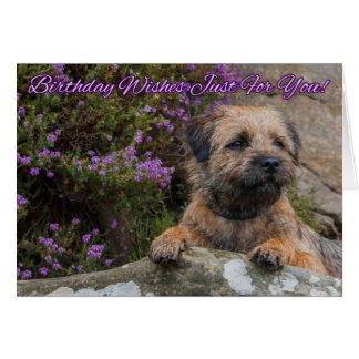 Border Terrier On A Rock With Wild Purple Heather Card