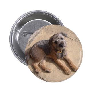 Border Terrier Puppy Badges