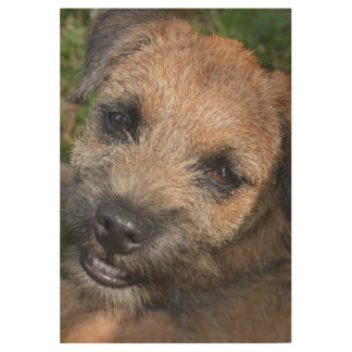Border-terrier puppy wood poster