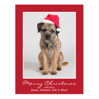 Border Terrier Wearing A Santa Hat Postcard