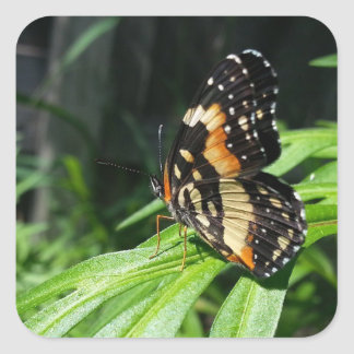 Bordered patch exotic butterfly custom stickers