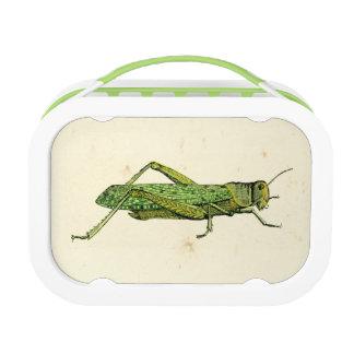 Bordered Print of Green Grasshopper Lunch Box