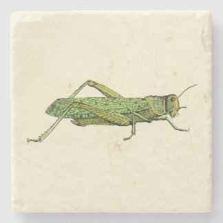 Bordered Print of Green Grasshopper Stone Coaster