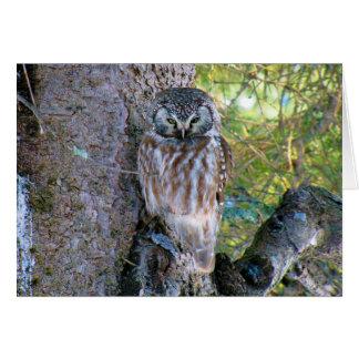 Boreal Owl Closeup Photo Greeting Card