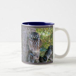 Boreal Owl Closeup Photo Coffee Mugs