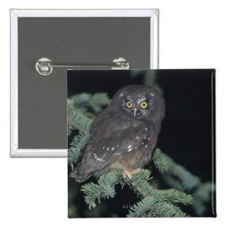 Boreal Owl on Branch 15 Cm Square Badge