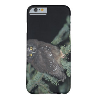 Boreal Owl on Branch Barely There iPhone 6 Case